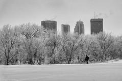 Snowy Day (Jim.J.H) Tags: winter blackandwhite bw winnipeg hoarfrost snowing winnipegskyline winterscenes fallingsnow
