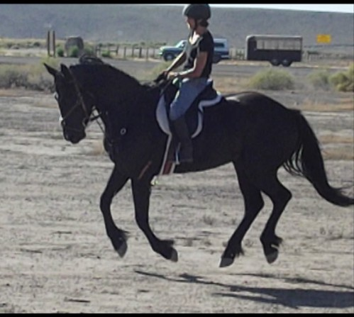 Gala 2 yrs 9 mos canter 2