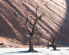 "Deadvlei Sossusvlei Namibia • <a style=""font-size:0.8em;"" href=""https://www.flickr.com/photos/21540187@N07/8294029190/"" target=""_blank"">View on Flickr</a>"