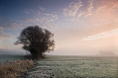 Misty Sunrise III (steve_thole) Tags: trees winter mist cold colour tree nature field grass misty fog rural sunrise landscape dawn countryside frost december farm farming meadow bluesky somerset frosty farmland crisp fields moors moor clevedon moorland kenn