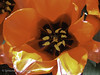 "Tulip heart • <a style=""font-size:0.8em;"" href=""http://www.flickr.com/photos/44019124@N04/8311007986/"" target=""_blank"">View on Flickr</a>"
