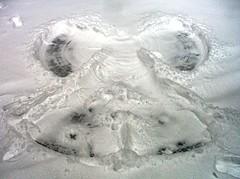 Taa Daa - Snow Angel! (Georgie_grrl) Tags: winter snow toronto ontario canada downtown snowy snowing trinitybellwoodspark thewhitestuff mydarkpinkside samsungd760 andwerenottalkingoreoshere ibundledupandheadedoutthere