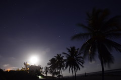 moonlight in beach bay (philipp.richter) Tags: camera trees love beach night stars photography this islands evening bay nikon long exposure skies peace off calm palm clear bitch moonlight caribbean cayman straight richter philipp grandcayman 18105mm nikond5100
