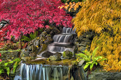 Waterfall in HDR Fall Colors (David Gn Photography) Tags: autumn color tree fall nature oregon garden season botanical japanese waterfall maple backyard rocks landscaping change ferns hdr 3xp hardscape canoneos60d sigma2470mmf28ifexdghsm