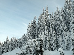 Cypress (Brian Chase Photography) Tags: trees mountain snow canada bc cypress westvancouver