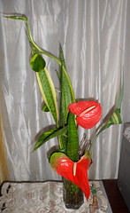 Anthurium Design - Florist in Barbados (sejuselektion) Tags: birthday tropical barbados florist anthurium flowershop flowershops tropicalflowers anthuriums sejuselektion flowershopinbarbados sejuselektionflowershop sejuselektionflowergiftshop flowershopsinbarbados barbadosflorist barbadosdestinationweddings