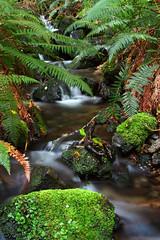 Creek on Mt Somers Track (NathanaelBC) Tags: newzealand fern creek canon river moss canterbury dslr mtsomers polariser 400d canonef2485mmf3545usm