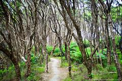 Bush walk to Pitt Head (hueymilunz) Tags: tree green nature forest photography bush walk wordpress nelson nz