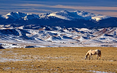 From Mountains to Plains (Fort Photo) Tags: horse nature equine landscape laramiefoothills rockies mountain mountains snow winter seasons mammal livermore co larimer colorado nikon d300 blinkagain clff
