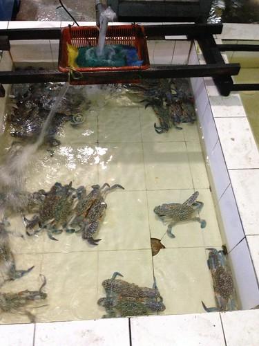 Kuala Selangor Crabs