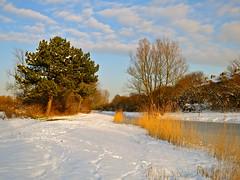 De Haagse Beek (Frans Schmit) Tags: winter snow sneeuw denhaag thehague haagsebeek fransschmit