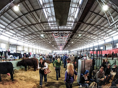Fort Worth Stock Show and Rodeo (Matt Pasant) Tags: light people cowboys dallas texas cows tx fisheye poop dfw livestock smelly fortworth dirtyshoes smells fishey stockshowandrodeo omdem5