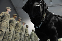 af occupationaltherapy therapydog bagramairfield cosc combatstress
