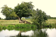(merseymouse) Tags: rivers trees reflections nature water eastanglia landscapes ely