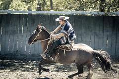 Un huaso en el rodeo (hapePHOTOGRAPHIX) Tags: 152chl amricadelsur chile chileanrodeo cowboy fognlosalerces huaso lamedialuna loslagos nikond750 pferd rodeochileno southamerica sdamerika tier animal chilenischerlandarbeiter equestrian equine hapephotographix horse horses rodeocorral puertomontt xregin cl