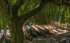 Pier with willow tree - II (KF-Photo) Tags: 1610 anlegestelle baum boote neckar neckarufer stocherkahn tbingen weide