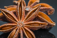 Macro Mondays - Star Anise (Neyol) Tags: macro monday happy explore brown aise star plant dried color landscape canon colour 70d black seed dust aniseed pod cooking dof depth of field 100mm ef100mm gosport hampshire