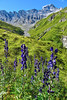 """Val Maisas - In search for """"das rotes Seeli"""" - Samnaun - Graubünden - Schweiz (Felina Photography) Tags: felinafoto felinaphotography felina photographer photography fotografia fotografie fotografo fotografa tourism turismo toerisme turismus tourismus hiking hike tour trip adventure hotspot excursion escursione excursions escursioni excursie tocht uitje ausflug gita poster wallpaper switzerland suisse svizzera schweiz zwitserland alps alpi alpen mountain montagna montagne landscape landschap paysage paesaggio nature natura natuur 旅遊 瑞士 遠足 攝影 graubünden grigioni grisons grischun aconite aconitum monnikskap monkshood stammerspitz pitztschütta"""