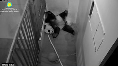 2016_09-04f (gkoo19681) Tags: beibei sleepyhead feetsies toocute stillfit stillababy adorable ccncby nationalzoo