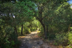 Forest Walk (oliko2) Tags: path walk forest sardinia trees nikond7100 italy sun shadows