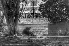 Perro solitario. (chwmax) Tags: perro dog bw monocromo solitario mascota solitary lonely