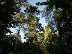20160814_181246 (vale 83) Tags: public garden panevo serbia nokia n8 colourartaward