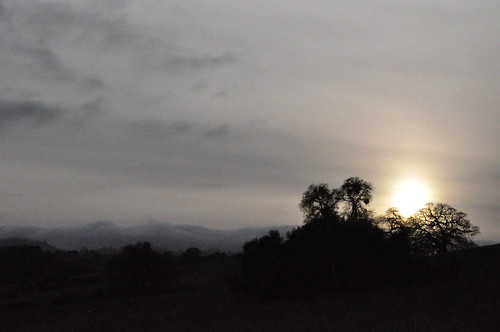 Sunset behind Live Oaks at Arastradero Park