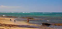 Dogs of Doom (jcc55883) Tags: ocean sea sky dogs hawaii nikon oahu horizon pacificocean yabbadabbadoo d40 kaalawaibeach nikond40 diamondheadroad dogsofdoom