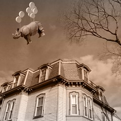 in search of fig newtons (Janine Graf) Tags: cameraphone travel bw silly 6x6 ma clusters balloon surreal oldhouse rhino artrage newton whimsical whiterhinoceros fignewtons mobilephotography juxtaposer janine1968 iphone4s scratchcam janinegraf