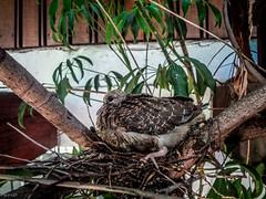Se hace pequeño el nido (pacoco71) Tags: freedomtosoarlevel1birdphotosonly freedomtosoarlevel1birdsonly