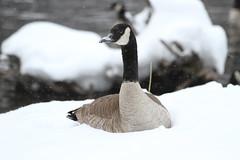 Hallam Lake Winter 12-13