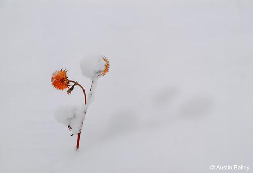 Photo - Snowcap