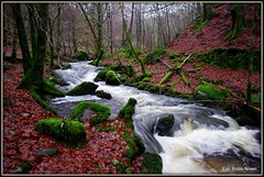 Birnam Glen and the Inchewan Burn. (eric robb niven) Tags: trees winter landscape scotland glen rivers birnam pentaxkx mygearandme ericrobbniven