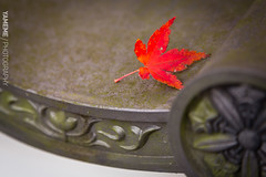 瓦上楓 Maple Leaf / Kyoto, Japan (yameme) Tags: travel japan canon eos maple kyoto 京都 日本 kansai 旅行 關西 楓葉 eikando 永觀堂 24105mmlis 5d3 5dmarkiii