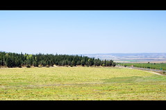 Fields and Forest (Ben Unleashed!) Tags: green forest landscape israel fields megiddo pentaxkr