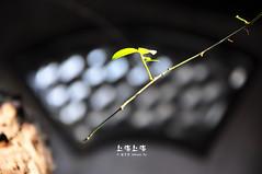 "DSC_9009 (2) (Minions_) Tags: china asia shanghai prc 中国 上海 城市 夜景 cityview ""shanghai 亚洲 中国上海 魔都"
