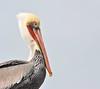 Brown Pelican #14 (andertho) Tags: bird pelican brown brownpelican elkhorn slough elkhornslough mosslanding moss landing nature beauty marine california sfist cool uncool cool2 uncool2 uncool3 uncool4 uncool5 uncool6 uncool7 cool3 delete2 delete delete3 save save2 save3 delete5 save4 save5 save6 delete7