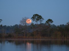 Full Moon Setting (tclaud2002) Tags: florida martincounty
