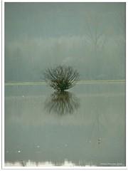 Hochwasser - flood water (Jorbasa Mwa) Tags: germany deutschland hessen geotag wetterau jorbasa geoag