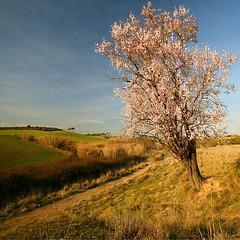 in the field of dreams II (Martha M G Raymundo) Tags: tree texture nature square landscape almendros marthamgr m®©ãǿ►ðȅtǭǹȁðǿr◄©