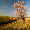 in the field of dreams II (MarthaMGR ❀I´m back again❀) Tags: tree texture nature square landscape almendros marthamgr m®©ãǿ►ðȅtǭǹȁðǿr◄©