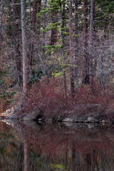 Pond Decor 13 (LongInt57) Tags: autumn trees brown canada reflection tree green fall nature water forest reflections grey reflecting pond bc okanagan gray valley kelowna ponds forests