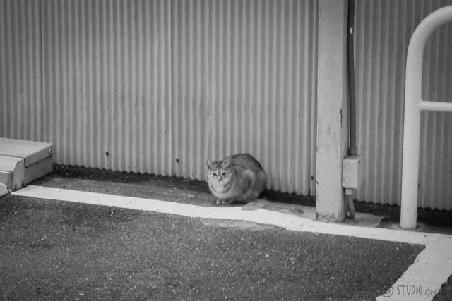 Today's Cat@2013-01-24