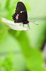 Mariposa II (Jesus Portal) Tags: butterfly flor mariposa