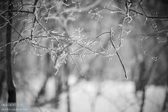 Just delicate (dina bennett) Tags: trees winter blackandwhite snow forest sticks woods frost bokeh branches frosty twigs winterbeauty frostybranches dinabennett