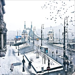 Birds of freedom...... (Frank van de Loo) Tags: bridge schnee winter snow cold bird ice gelo birds puente vinter hungary hiver nieve sneeuw budapest vogels tram pssaro ponte lamppost 49 ave poultry neve pont invierno neige brug pollo duna streetcar brcke eis inverno sn ungarn fresco froid oiseau hielo hungria vogel glace pjaro donau kou uccello ijs ghiaccio tipo ungheria hungra klte lantaarnpaal freedombridge postedefarol egyetem hongarije hongrie libertybridge postedeluz tr pollita palodellaluce budapesti szabadsghd corvinus laternenpfahl fvm fvmtr tram49 dsc0814 poteaudclairage poteauderverbre