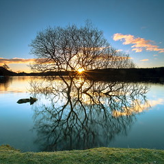 The Tree in the Loch (PeterYoung1.) Tags: uk trees nature beautiful sunrise reflections landscape scotland scenic squareformat ard lochard