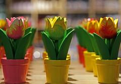 Fotoketting - Fotoklasje (eleni m) Tags: pink green rose yellow canon wooden groen tulips bokeh shelf flowerpot geel plank hout tulpen bloempot fotoklasje