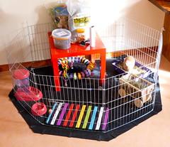 Clean home (Lottie's pets & stuff) Tags: pet house rabbit bunny home animal pen toys domestic condo setup accessories