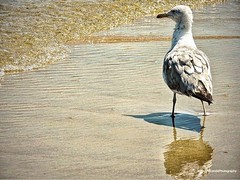 (Carly Miranda Photography) Tags: ocean sea summer reflection beach nature outdoors nationalpark newjersey sand nikon photographer seagull july sunny creature sandyhook nikonphotography